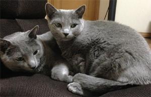 仲良くしているトン十郎の猫、ケイトーとクロエの写真