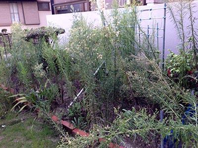主がいなくなって、雑草が生え放題になり、荒れてしまった庭