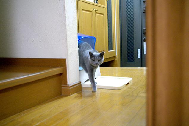 猫トイレから出てくる猫の写真