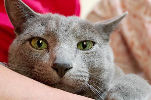 「早く撫でろよ」と言わんばかりに、こちらを見つめる彼(猫)の写真