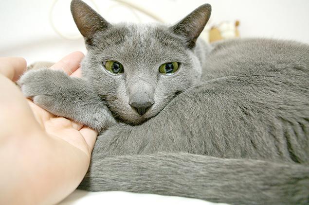 貸していただけそうにない猫さまの手の写真