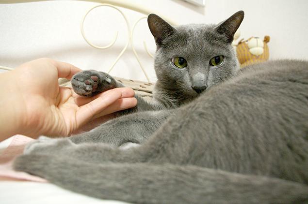 猫さまの手に触って、幸せを感じている写真