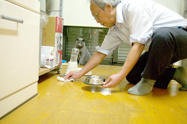 猫餌周りの床を掃除しているトン十郎と、後ろで見ているお客さま(ロシアンブルー)の写真