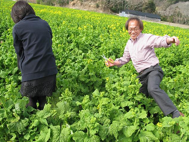 写菜の花畑ではしゃぐトン十郎の写真