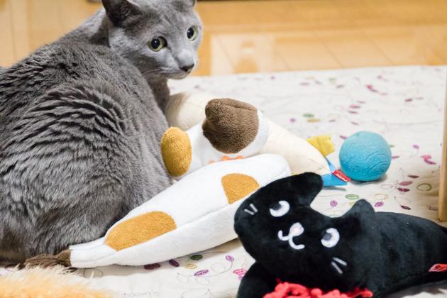 猫用品に囲まれて座っている写真
