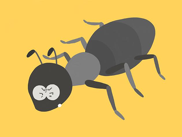 怒っている蟻のイラスト