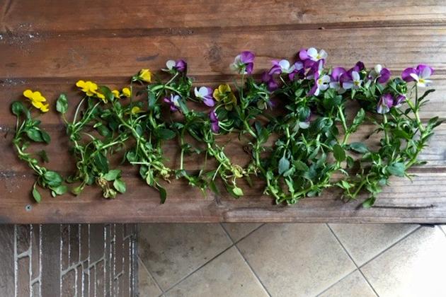 切り取った「徒長した花」の写真(写真2)