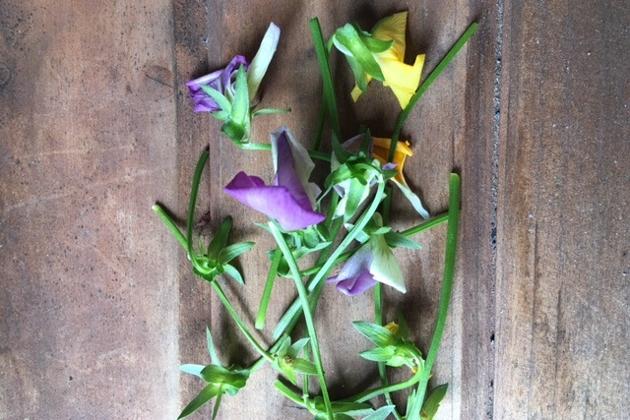 花が落ちたり、しぼんでしまっているものの写真
