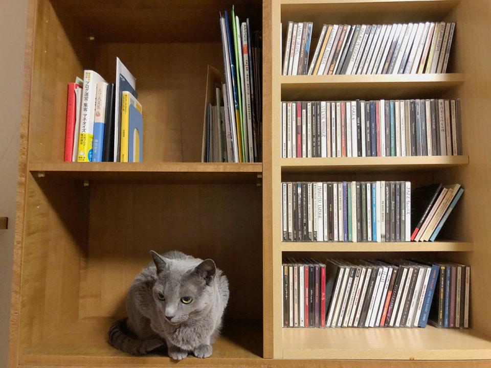 片付いた本棚の写真