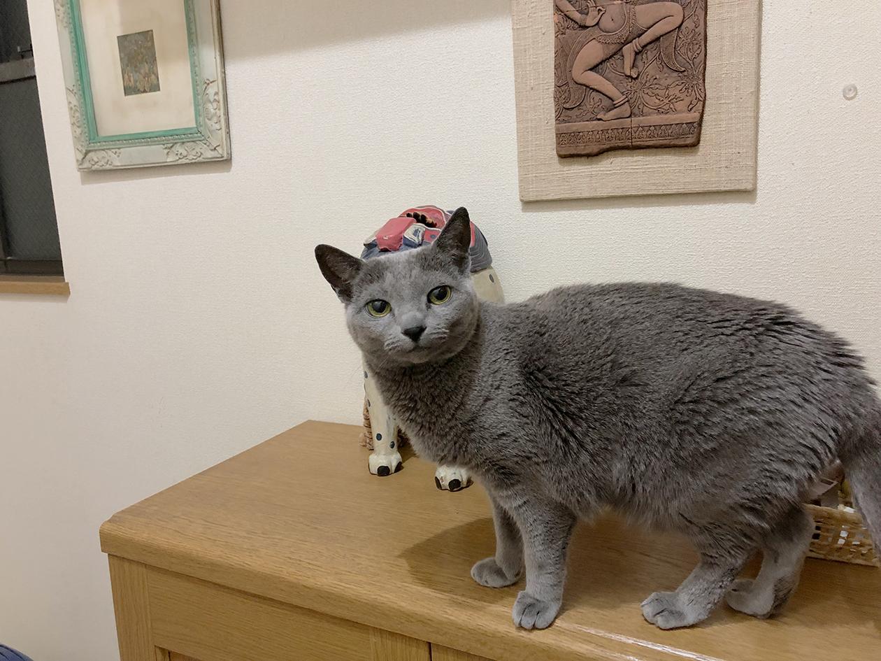 ウチの猫の写真