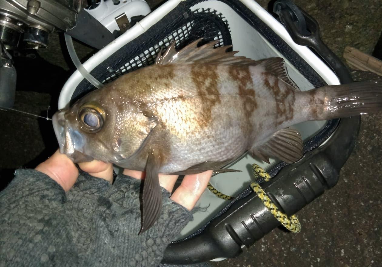 高橋が釣った魚の写真