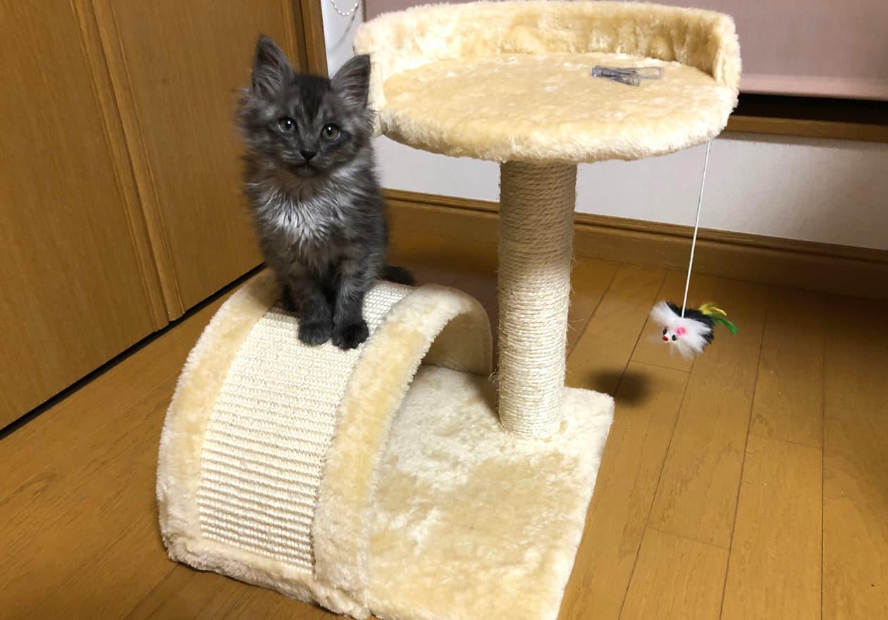 猫タワーと猫の画像