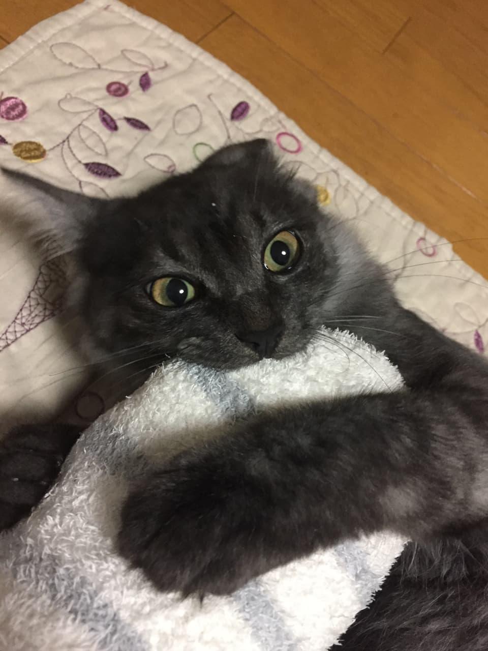 襲い掛かってきた猫の写真
