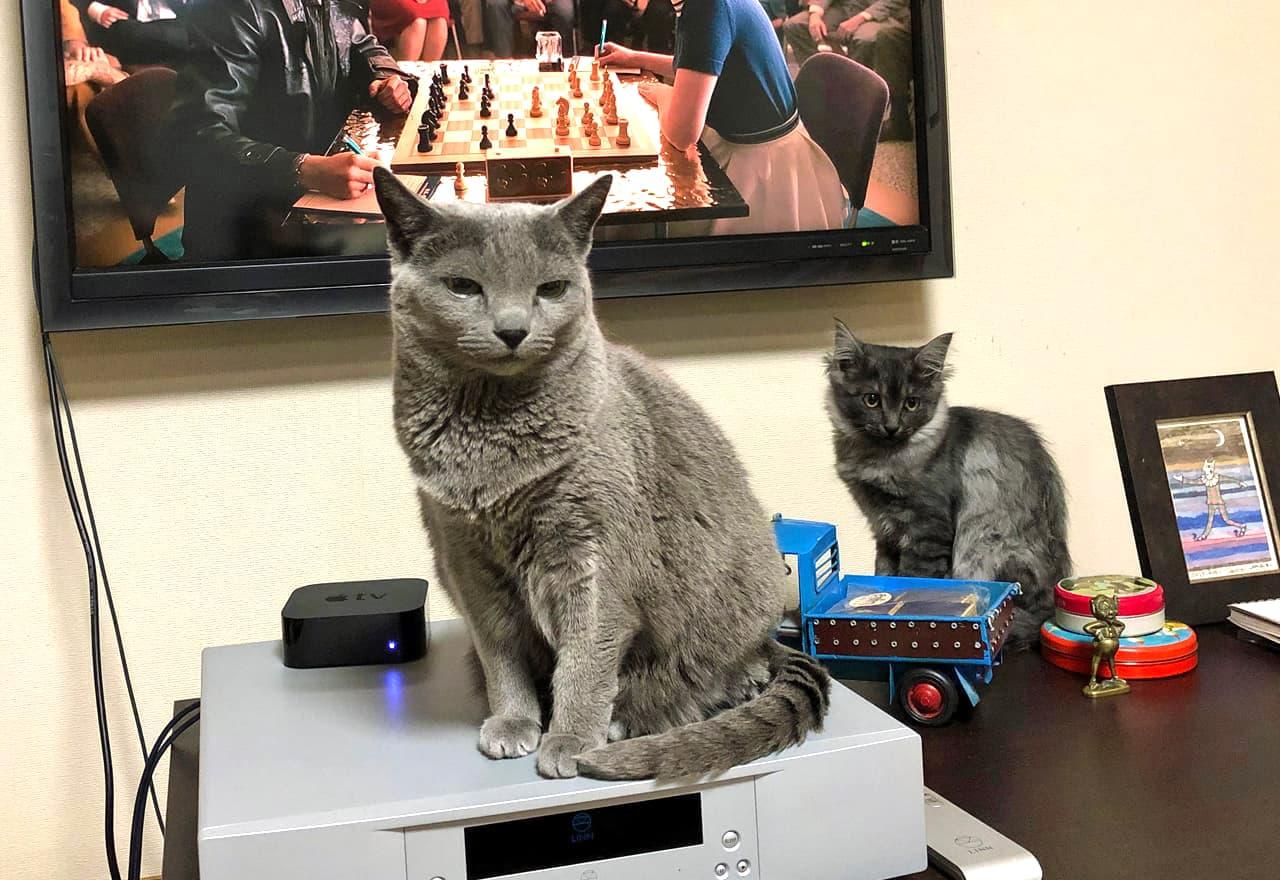2匹の猫が並んでいる様子